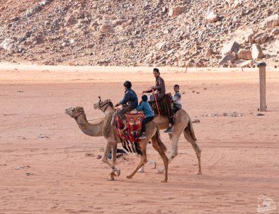 camel tour wadi rum